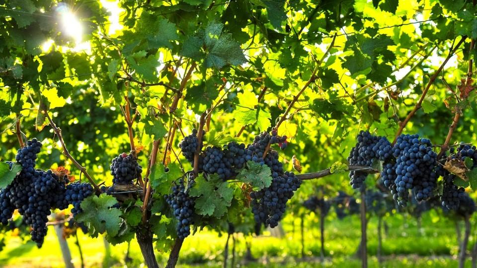grapes-banner-Personnalisé